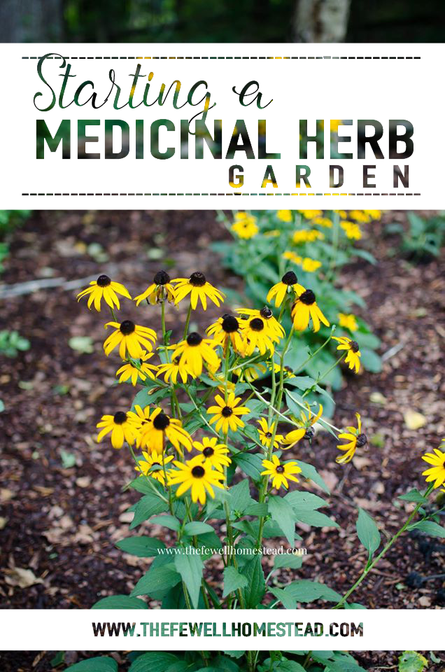 Starting a Medicinal Herb Garden The Fewell Homestead