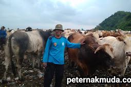 Miris, Ini  Kondisi Umum Ternak di Tempat Pembuangan Sampah Terpadu (TPST) Piyungan