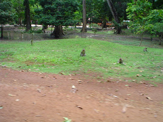 Macacos em templos de Angkor - Camboja