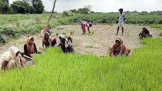 women-not-farmer