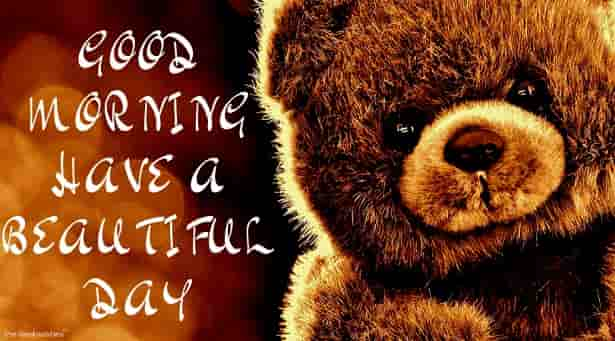 good morning with teddy have a beautiful day