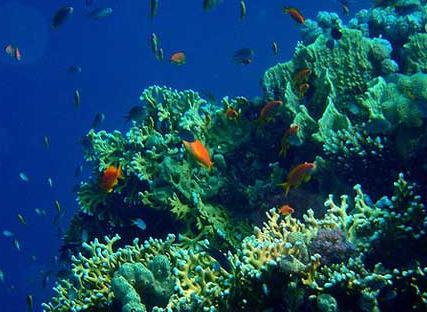Blogganeh: Pemandangan Bawah Laut yang Indah