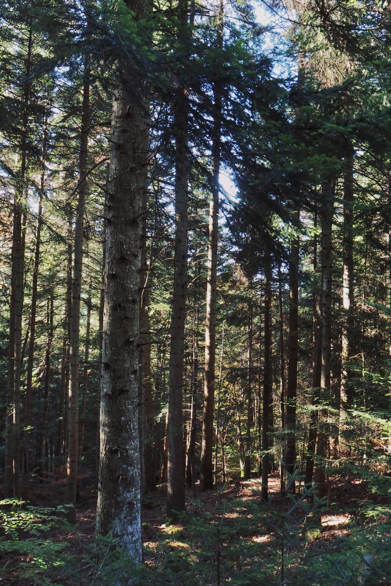 Paysage de forêt ardéchoise