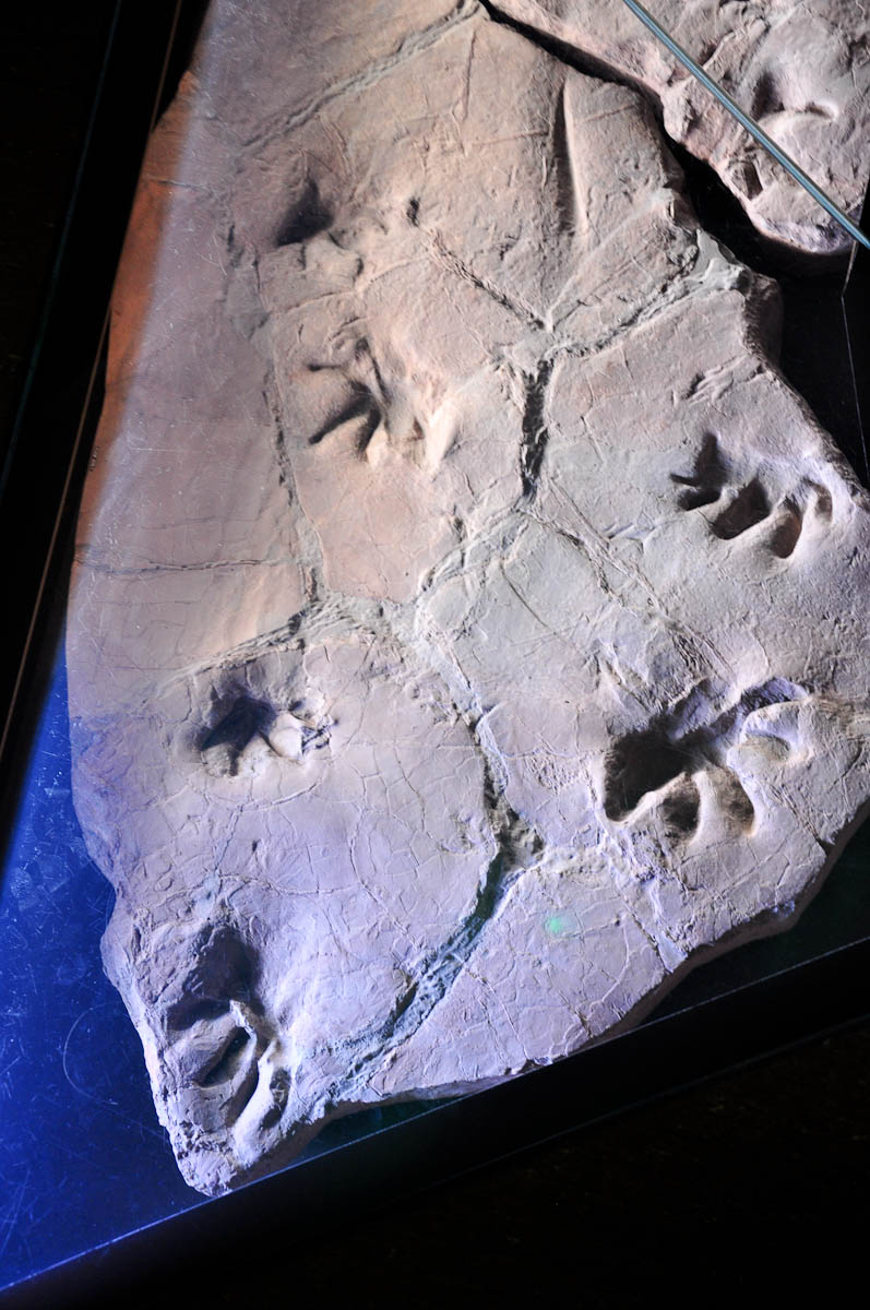 Fossil under a glass display on the floor, Natural History Museum, Venice, Italy