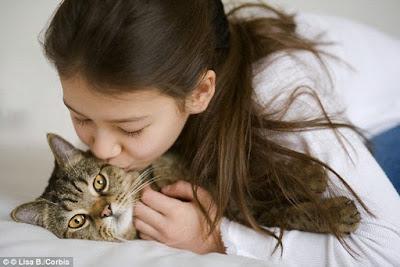 bahaya memelihara kucing