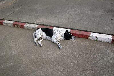 タイの野良犬