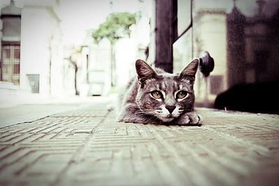 Hukum Menabrak Kucing