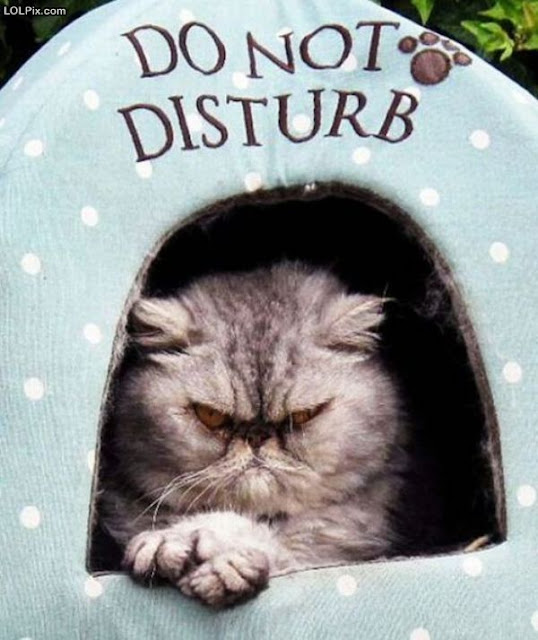Angry do not disturb cat picture