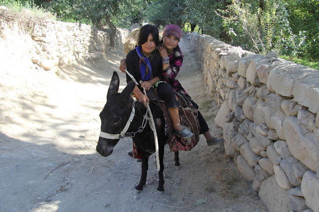 Ouzbékistan, Sentyab, âne, saxaoul, © L. Gigout, 2012