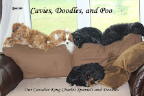 Cavies, Doodles, and Poo