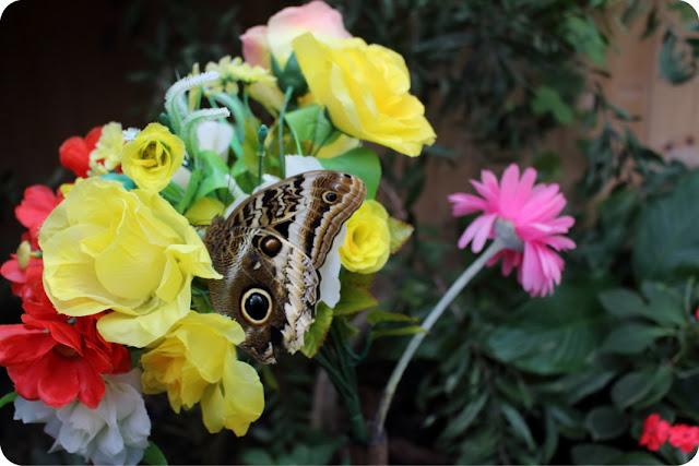 case delle farfalle in Italia