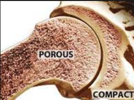 Five Foods that Make Quick Porous Bone