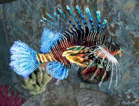 سمكة اسد البحر عندما يجتمع الجمال والخطر lifish_sl_530.jpg