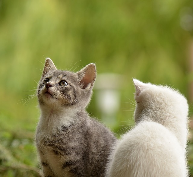 Things to grasp Before Breeding Your Cat