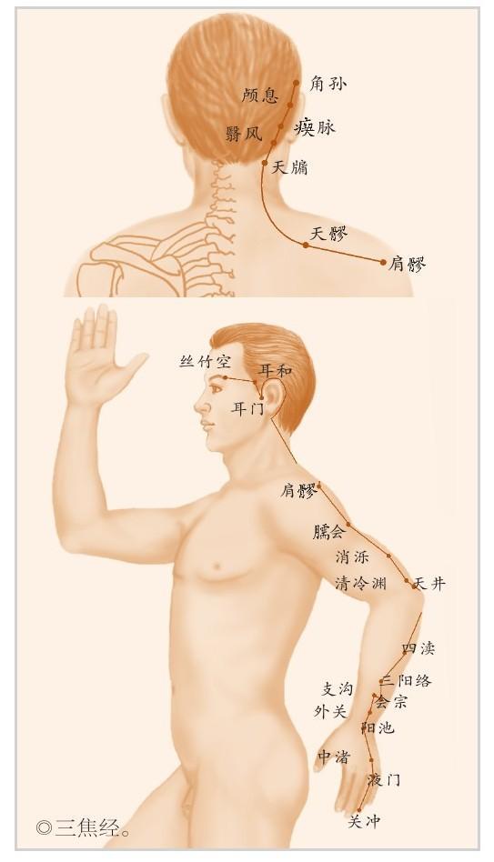 三焦經:人體健康的總指揮(分配氣血和能量)
