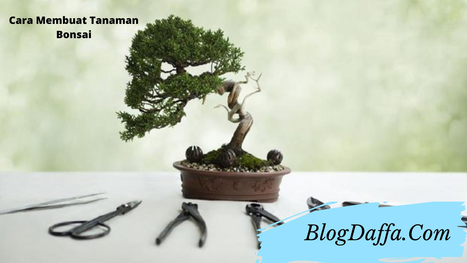 Cara membuat bonsai hias dengan mudah