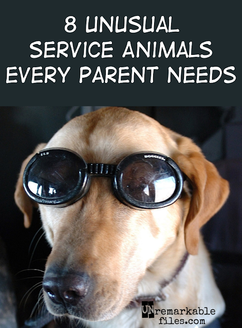 If you think outside the box, you'll see that you need these service animals every bit as much as I do.  {posted @ Unremarkable Files}
