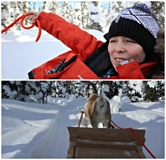 A collage featuring views from a reindeer sleigh