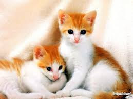 New Baby Cats Animal Hd Wallpaper8