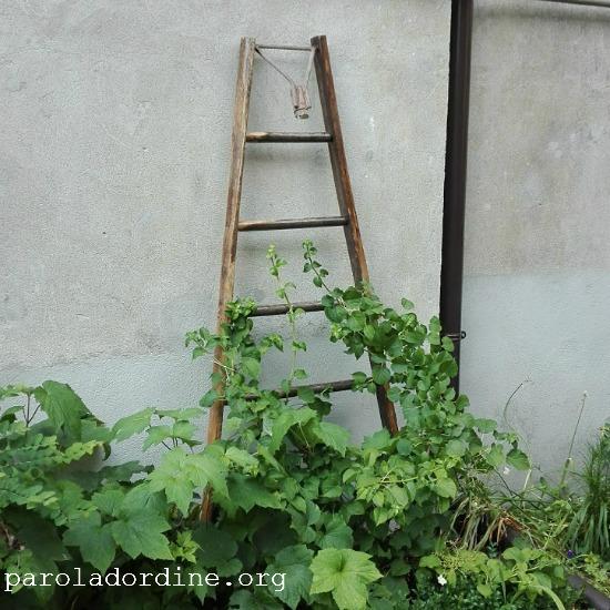 lastanzaverdedicri: scala per ortensia rampicante