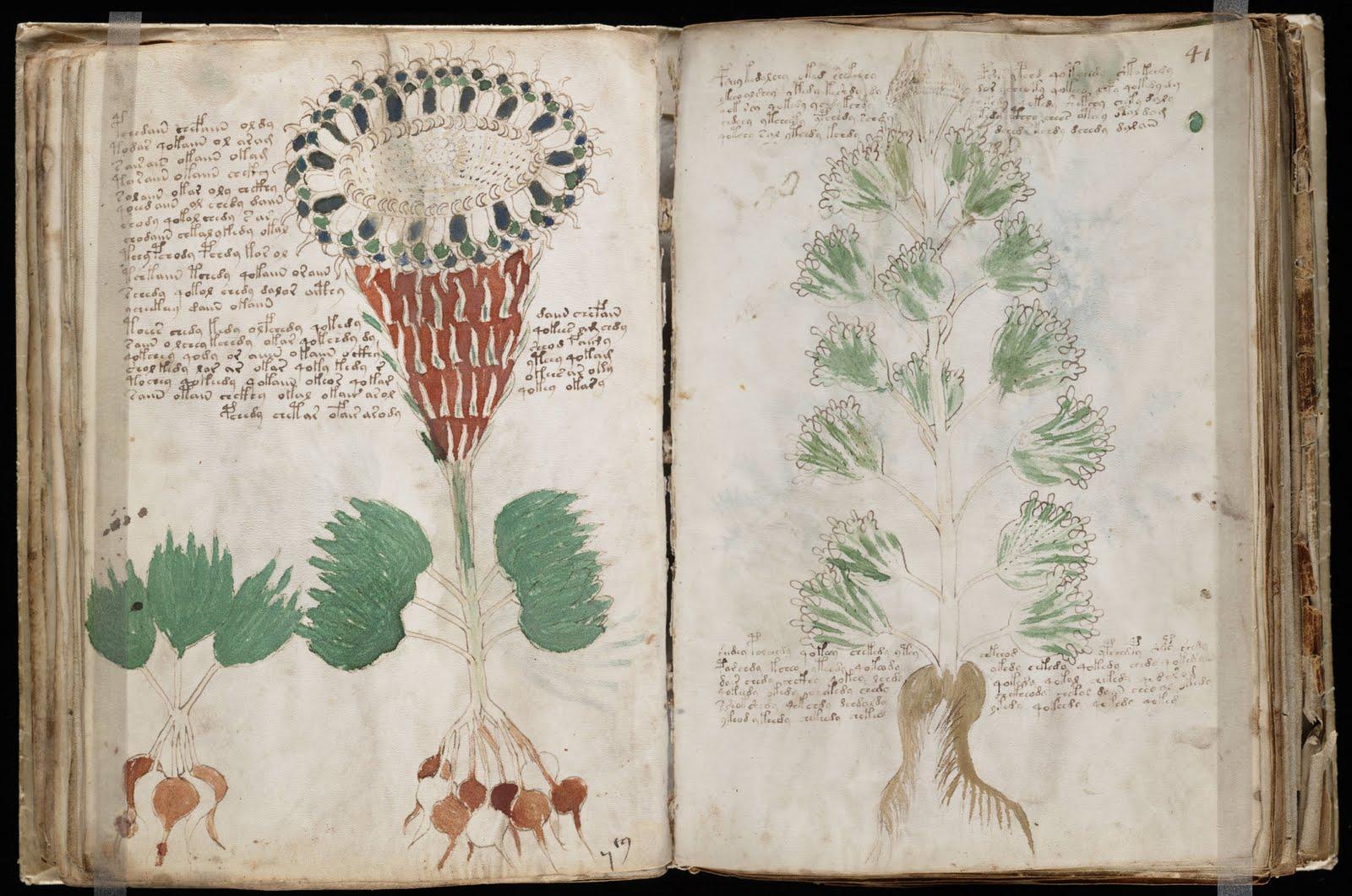 Contoh Gambar Ilustrasi Manuskrip Hilustrasi