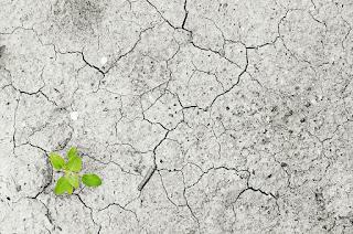Kimia Tanah , Jenis ,Unsur dan Pencemarannnya