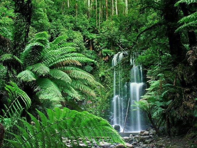 tropical rainforest indonesia