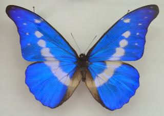 Museum des insectes du monde, Peyruis, malooka