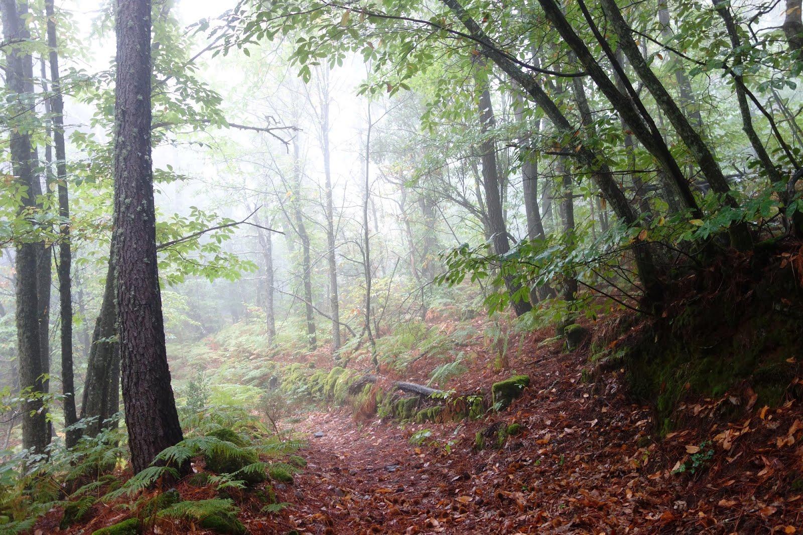 Días Lluviosos De Comienzos Del Otoño En Los Bosques De Gata
