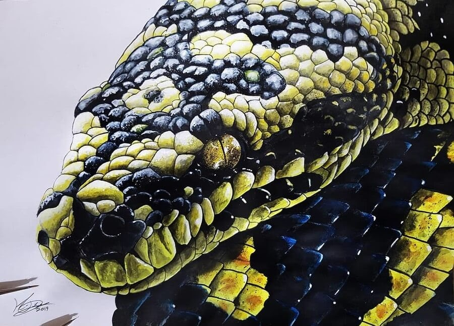 12-Carpet-Python-Kyle-Duca-Animal-Paintings-www-designstack-co