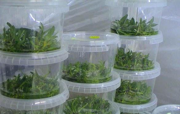 Bioteknologi Pertanian : 8 Penerapan Bioteknologi dalam Bidang Pertanian