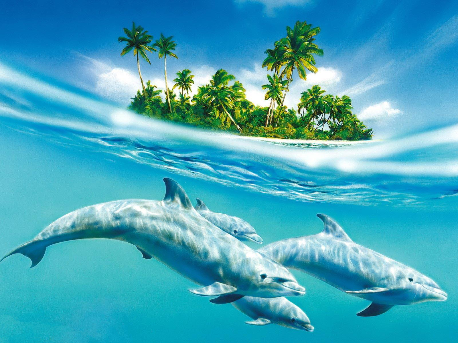 Hd dolphin wallpapers animal photo voltagebd Image collections
