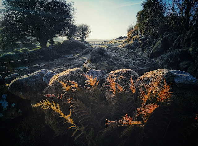 stone wall and frosty ferns, Connemara