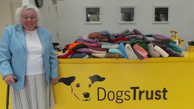 89-Year-Old Woman Knitted 450 Blankets And Dog Coats For Shelter Puppies