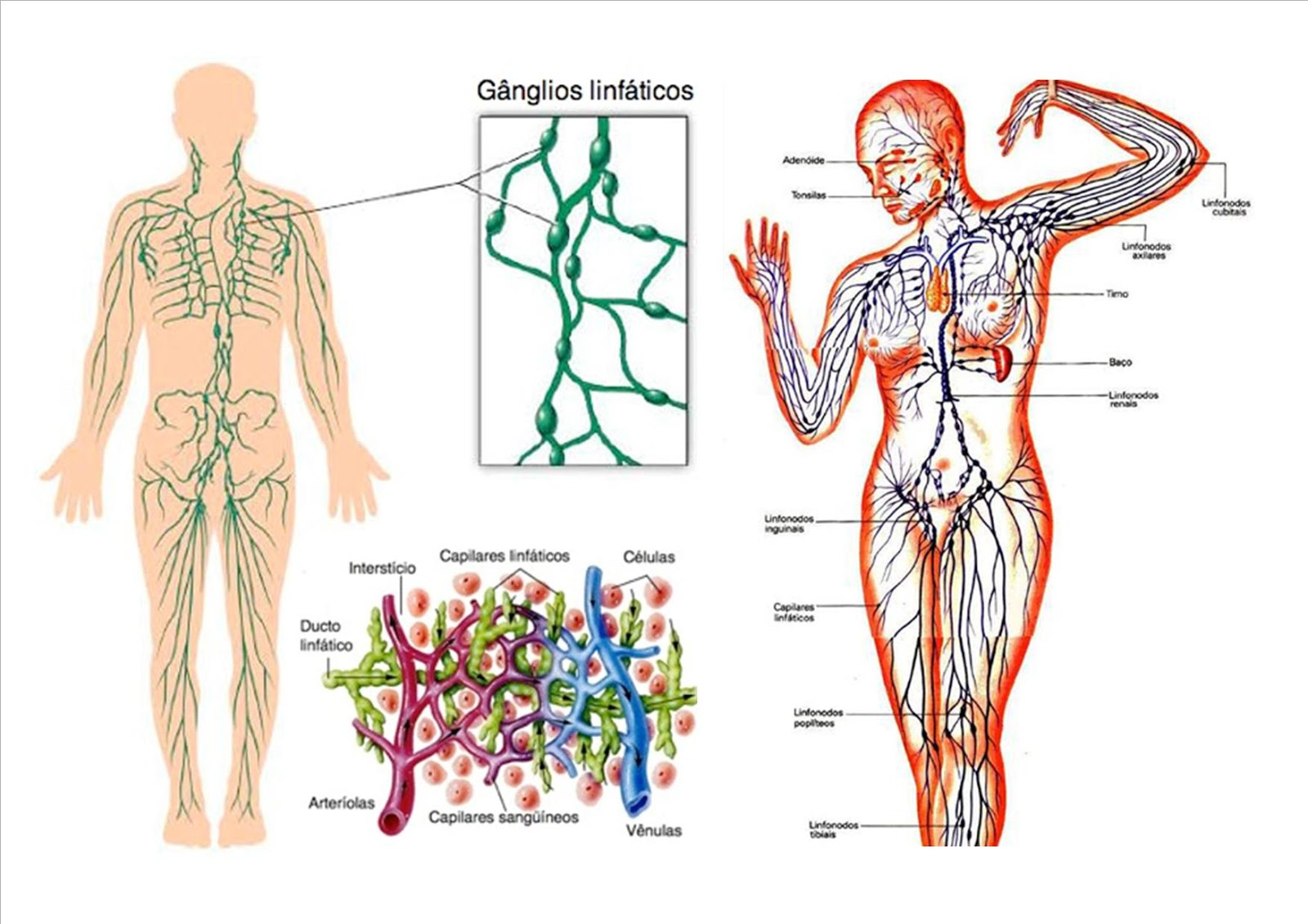 APRENDE y DISFRUTA con las CIENCIAS NATURALES: Sistema linfático y linfa
