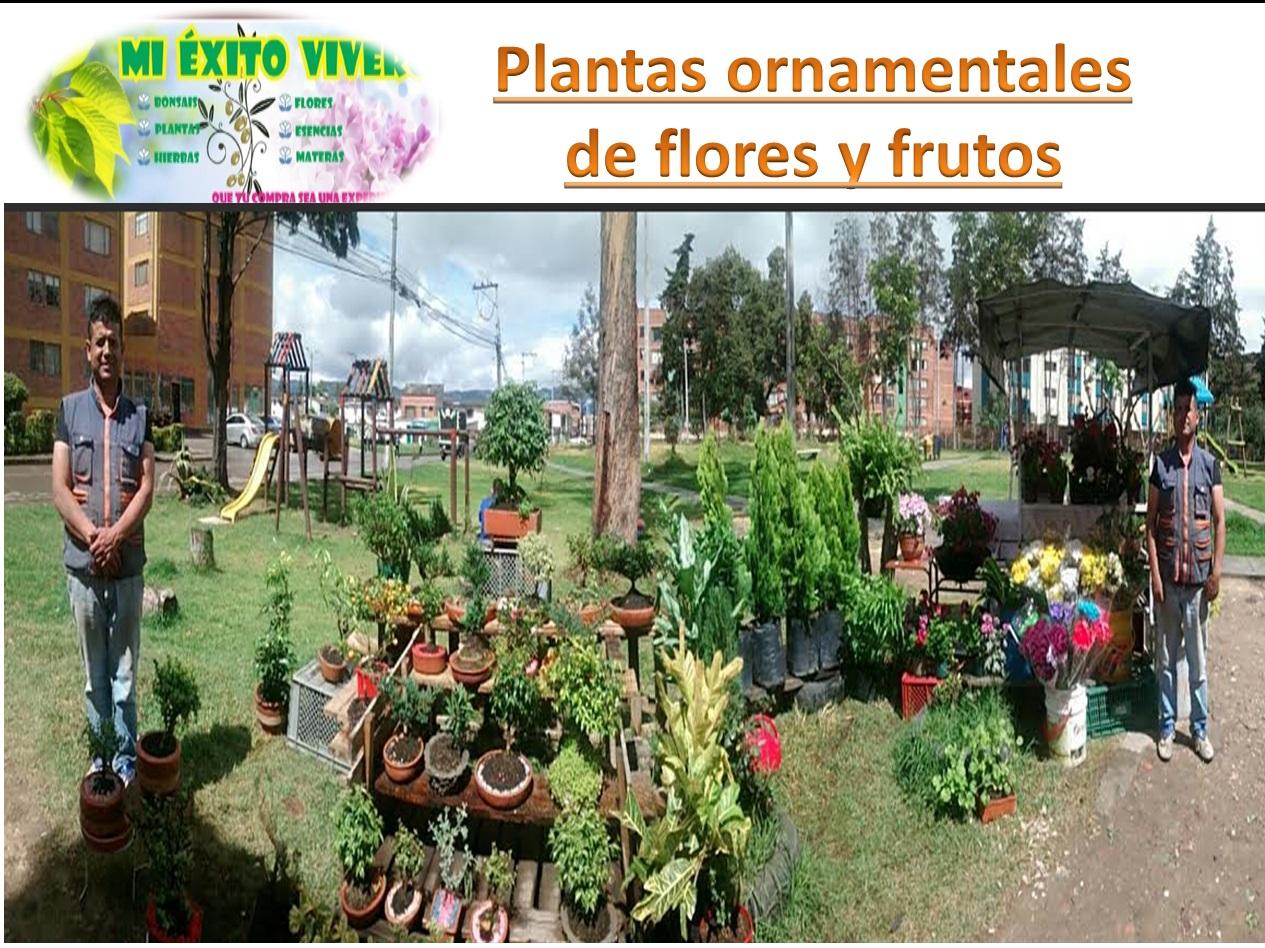 Viveros Frutales Bogota Of Mi Xito Vivero Jardineria Mi Exito Vivero Jardineria