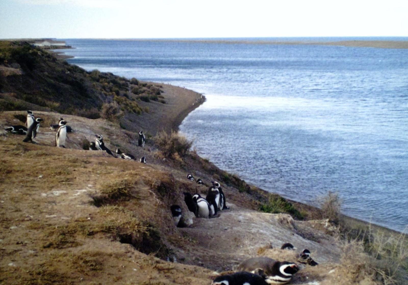 orcas christian dating site Meetups in anacortes northwest singles club - 40+ we're 69 members bellingham data orcas vegan meetup we're 42.