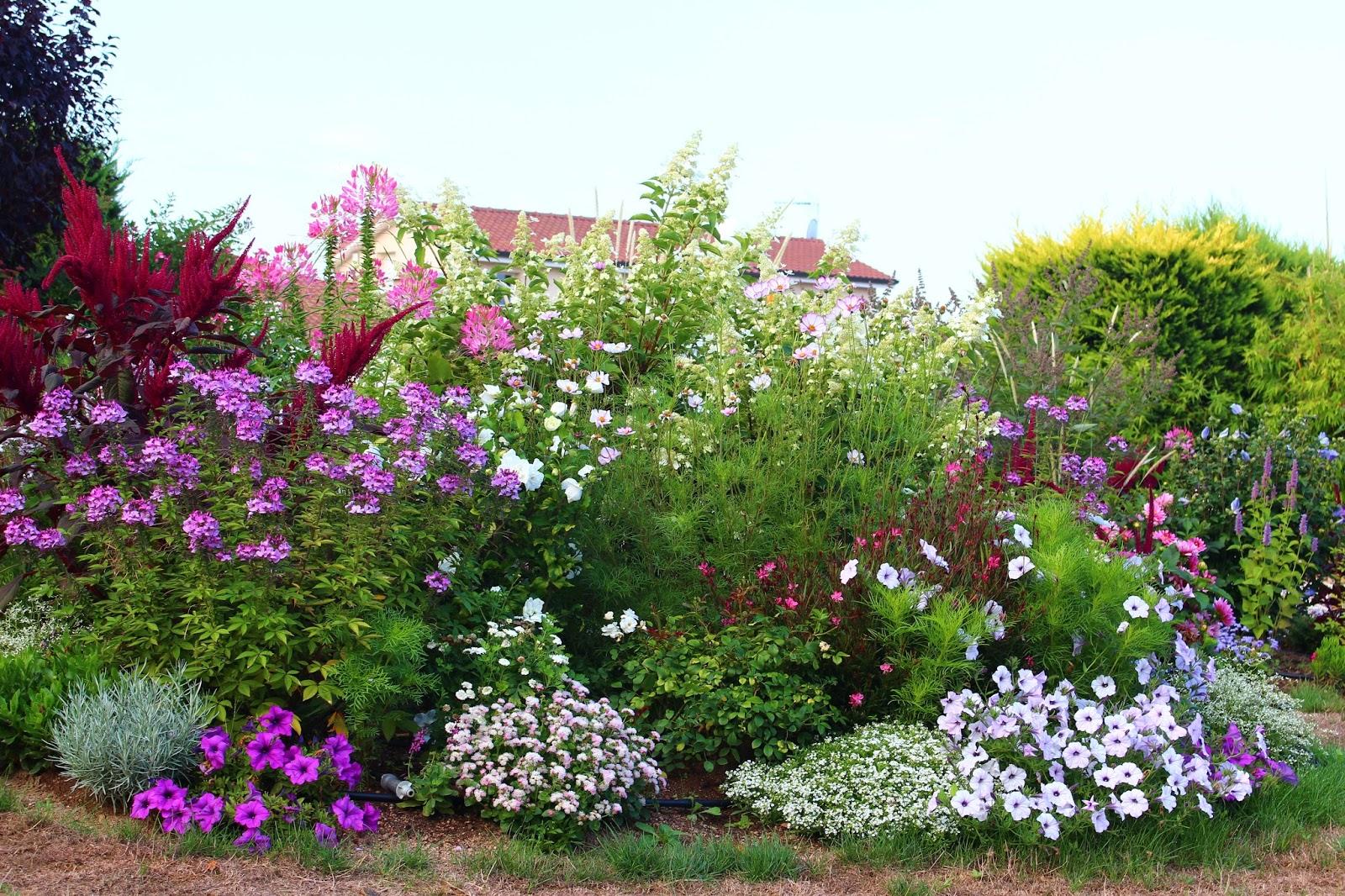 Super Roses du jardin Chêneland: Fleurs de l'été 2015 EZ33