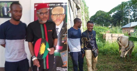 Cow Named Buhari Donated To IPOB Leader Nnamdi Kanu To Be Killed On Biafra's Day