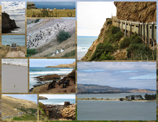 Scenes from the Otago Peninsula in New Zealand