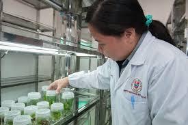 """""""manfaat bioteknologi"""""""