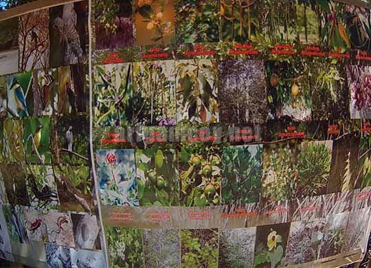 macam-macam jenis mangrove