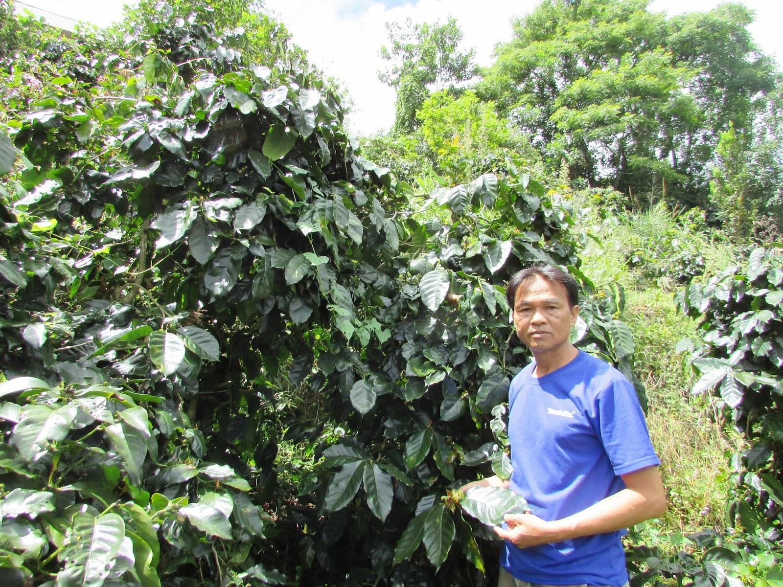 Võ Văn Việt: Cà phê Pacamara- chuyện kể từ Đà Lạt