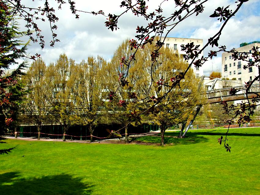 pelouse, arbres