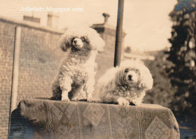 Cutey the poodle and unknown poodle https://jollettetc.blogspot.com