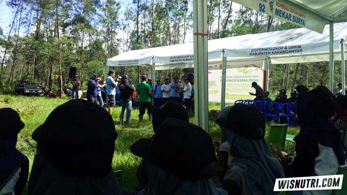 1000 Ecalyptus PT Indaco Warna Dunia