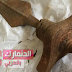 بالصور| اكتشاف سيف برونزي عمره 3 آلاف سنة في الدنمارك