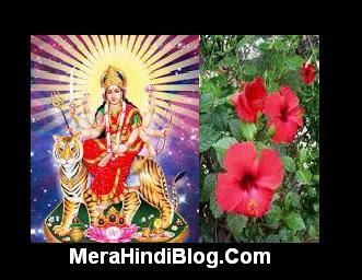 मां दुर्गा को लाल फूल ही क्यों चढ़ाना चाहिए? Maa Durge ko Red flower chadhane se kya fal milta hai?