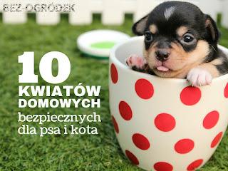pies i kot mogą zatruć się kwiatami doniczkowymi