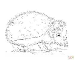Hedgehog coloring page 4
